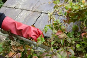 photo of gutter clogged with leaves