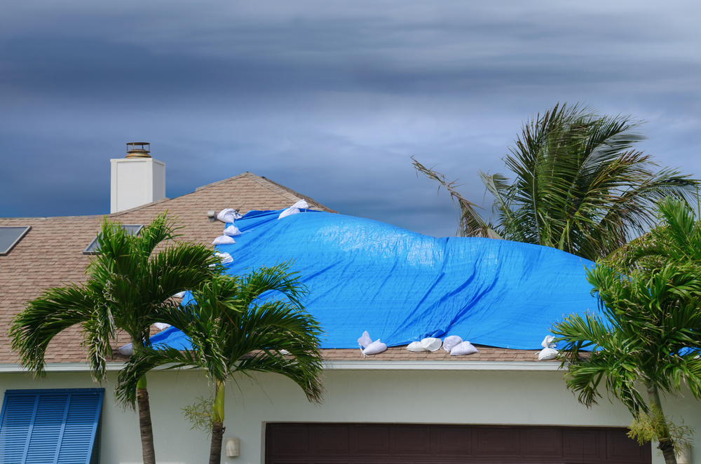damaged roof with blue tarp on top, palm trees blown by high winds